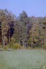 wojciech dulski fotografia rzeszow -34